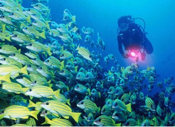Diving, Sanya Guide,Sanya Travel