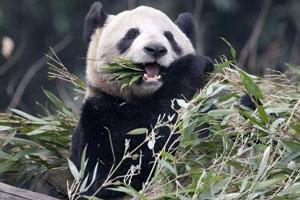 chongqing-zoo-1.jpg