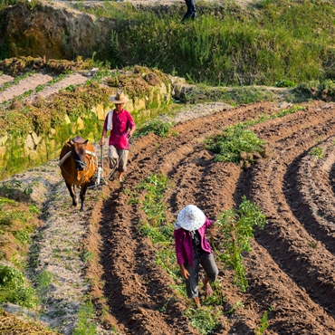 Fantastic Farming Participation Tour