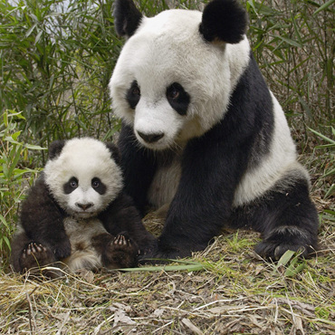 Family Tour with Panda Encounter
