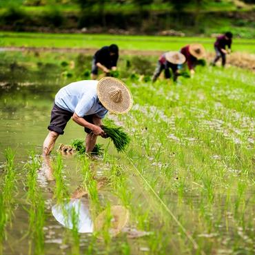 Yunnan Farming Participation Tour