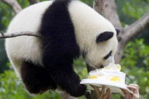 chongqing-zoo-2.jpg